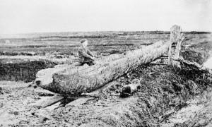 Bronze age dugout canoe