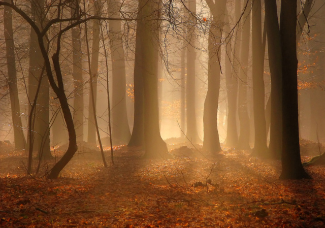 640x449_879_Forest_mist_forest_wood_fall_autumn_mist_photo_photography_digital_art