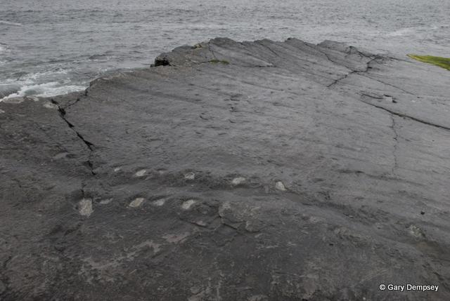 Tetrapod tracks Valentia