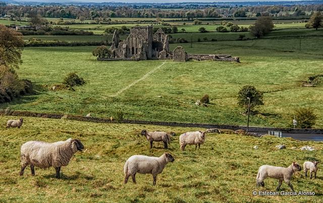 Hore Abbey, Cashel, Tipperary