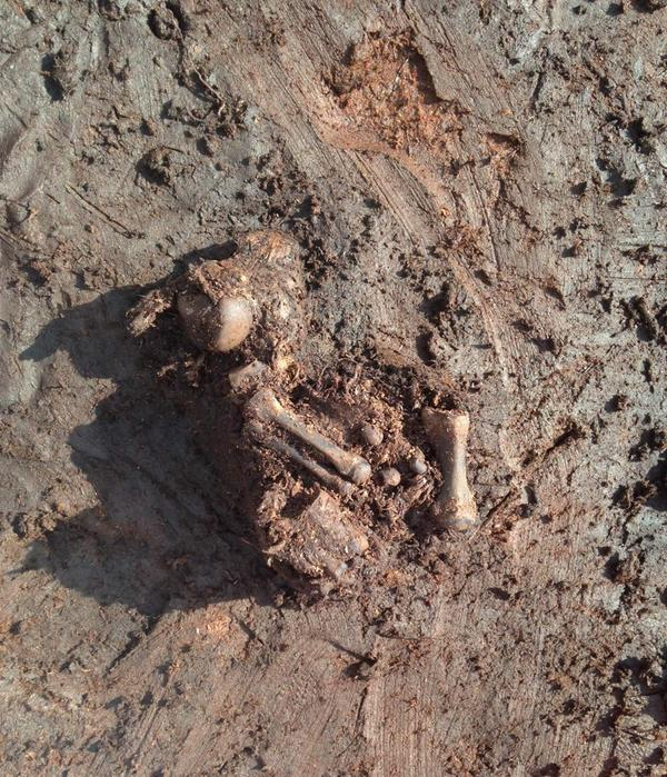 New bog body remains (photo National Museum of Ireland)