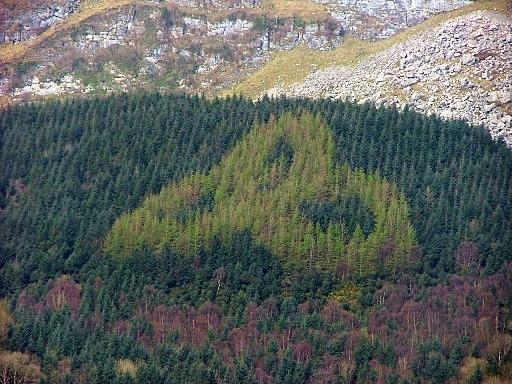 Trinity knot sligo wood