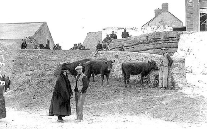 Cows on the Aran Islands, Co. Galway (National Library of Ireland)