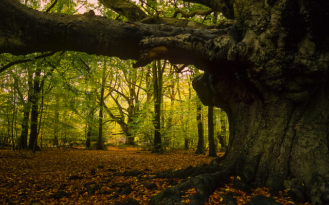 The Fairy King's advice on Trees  A poem from Early Ireland